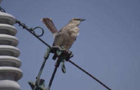 Bird 4k